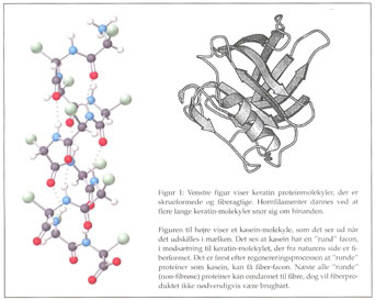 mælkeprotein